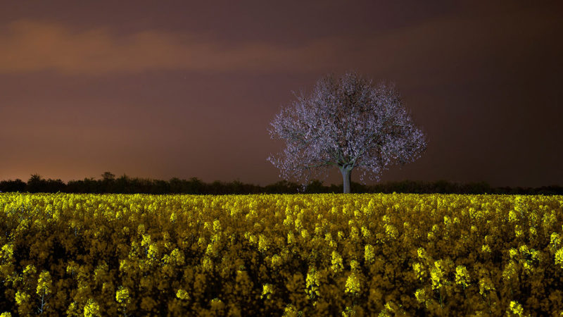 Light Art Photography - Landschaft - Tree in field of flowers - by JanLeonardo